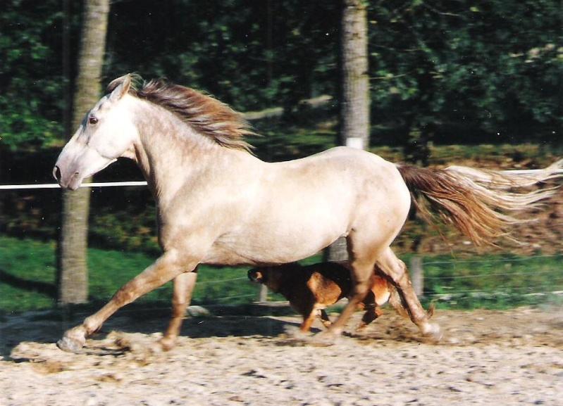"Concours : ""cheval au galop"" GAGNANTE : TItâne - Page 2 02410"