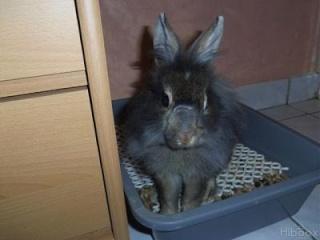 Basile (lapin,Bazar des nac) Lapin_10