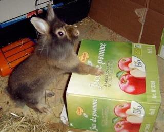 Basile (lapin,Bazar des nac) Lapin_11