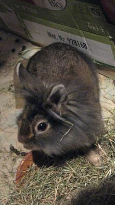 Basile (lapin,Bazar des nac) Lapin_12