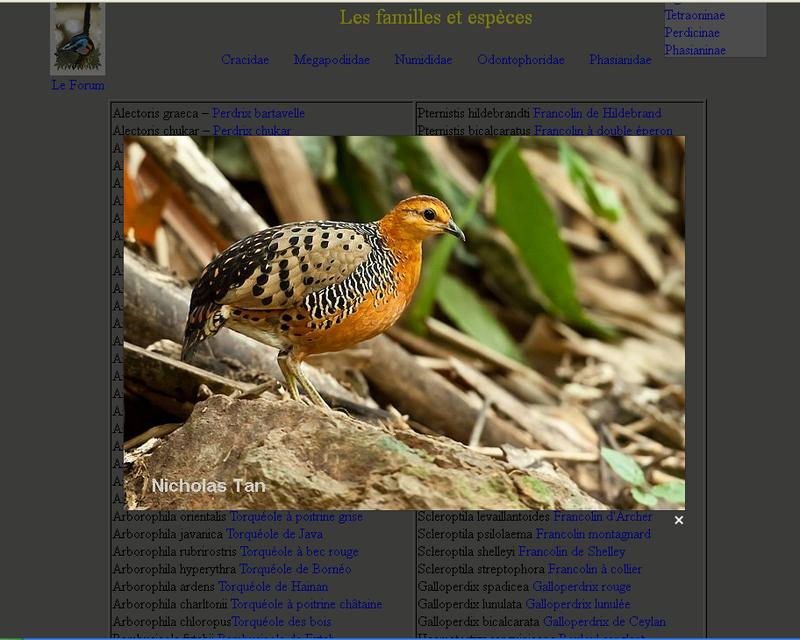 Le listing des espèces en images Listin10
