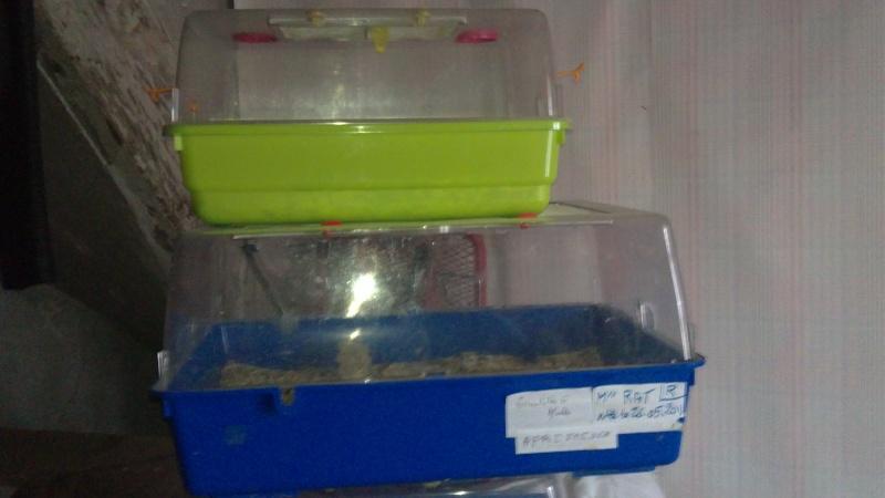 vente cages plexi, 89 10012021