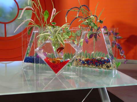 innové dans les aquariums  Aquafa10