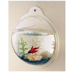 innové dans les aquariums  Betta-10