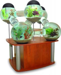 innové dans les aquariums  Betta-11