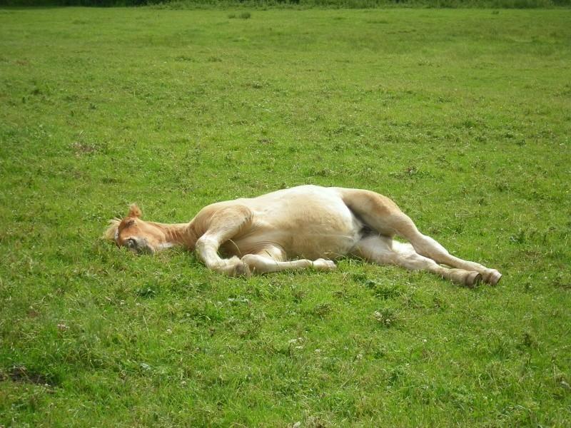 Thème juillet 2012 : Quand cheval rime avec poésie.... 100_0110