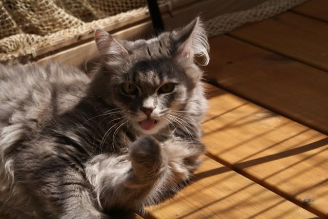 Concours photos: Le chat en vacances.... Dsc00210