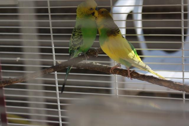 des copains pour menthe et citron Img_2714