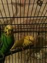 menthe et citron Img_0112