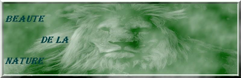 VOS CREATION ( gifs, photos, glitters...) Lion_c10