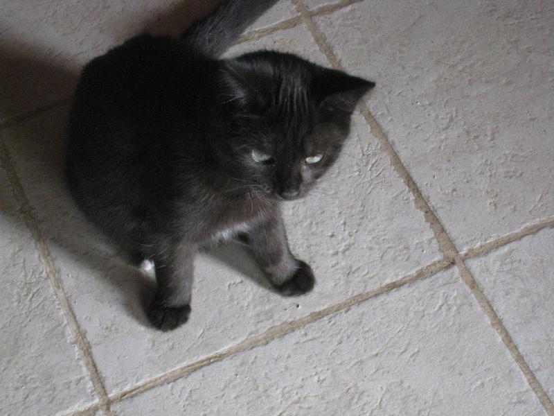 PRUNELLE - 6 mois - Femelle noir & plastron + bout des pattes blanc Img_3440