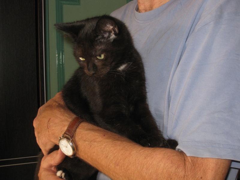 PRUNELLE - 6 mois - Femelle noir & plastron + bout des pattes blanc Img_3441