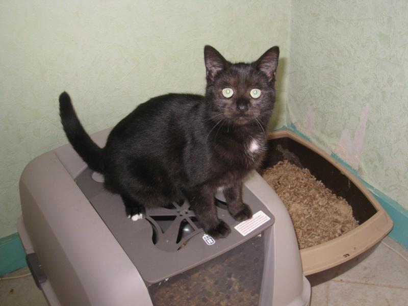 PRUNELLE - 6 mois - Femelle noir & plastron + bout des pattes blanc Img_3442