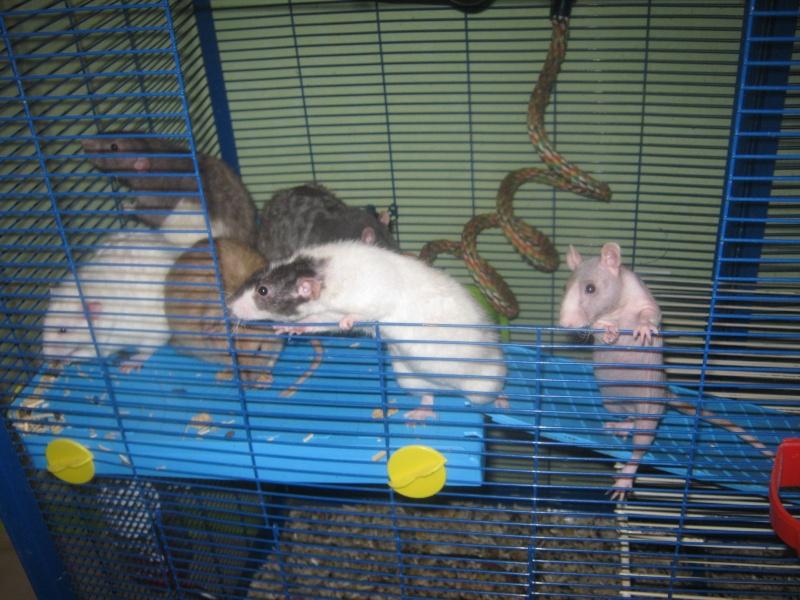 les filles et les garçons des CHAK'RATS  - Page 2 Img_0066