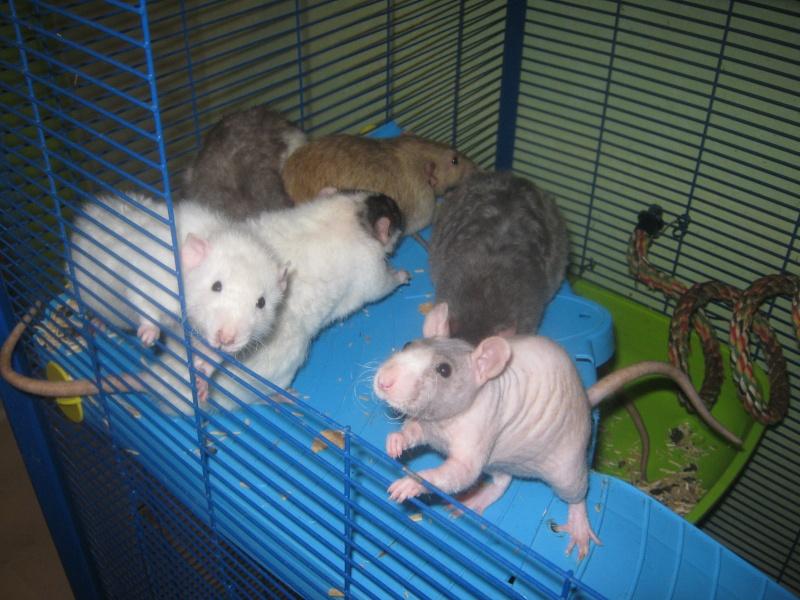 les filles et les garçons des CHAK'RATS  - Page 2 Img_0067