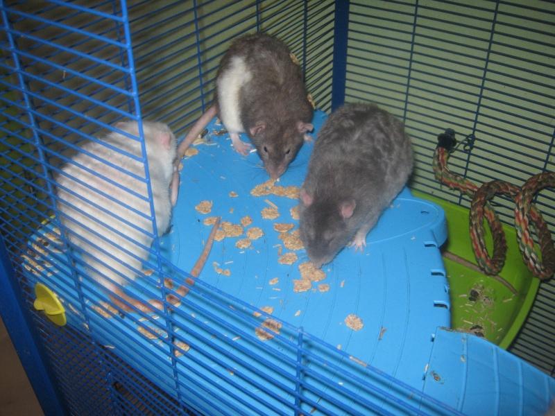 les filles et les garçons des CHAK'RATS  - Page 2 Img_0068