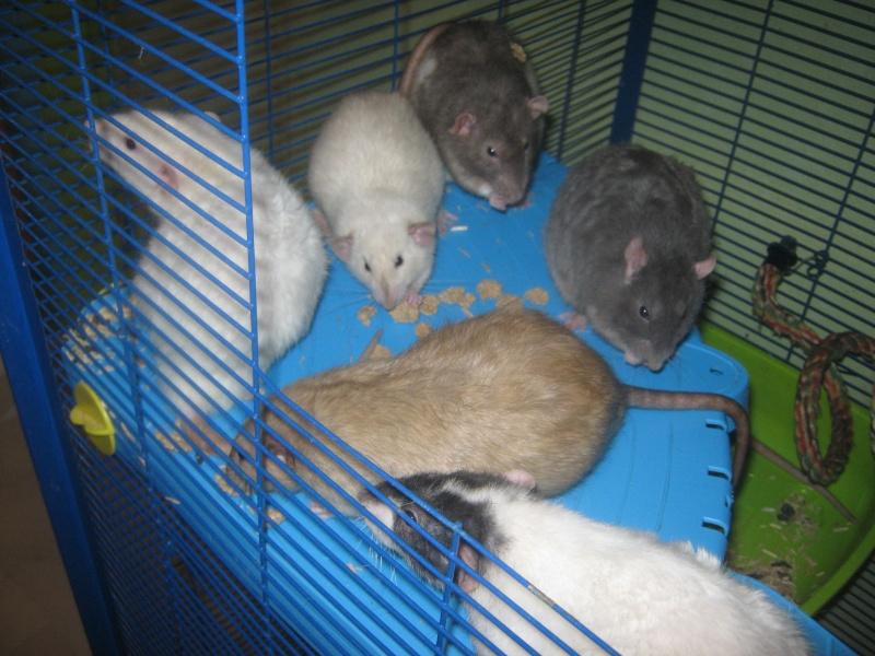les filles et les garçons des CHAK'RATS  - Page 2 Img_0069