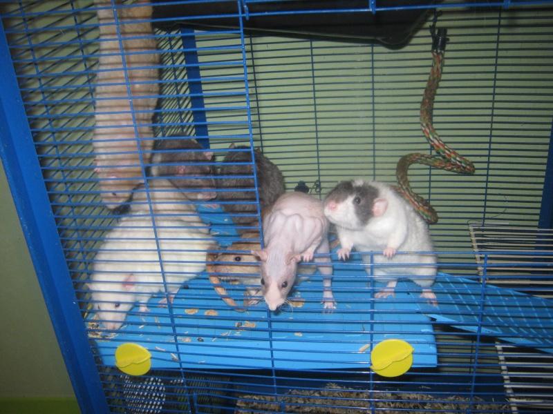 les filles et les garçons des CHAK'RATS  - Page 2 Img_0071