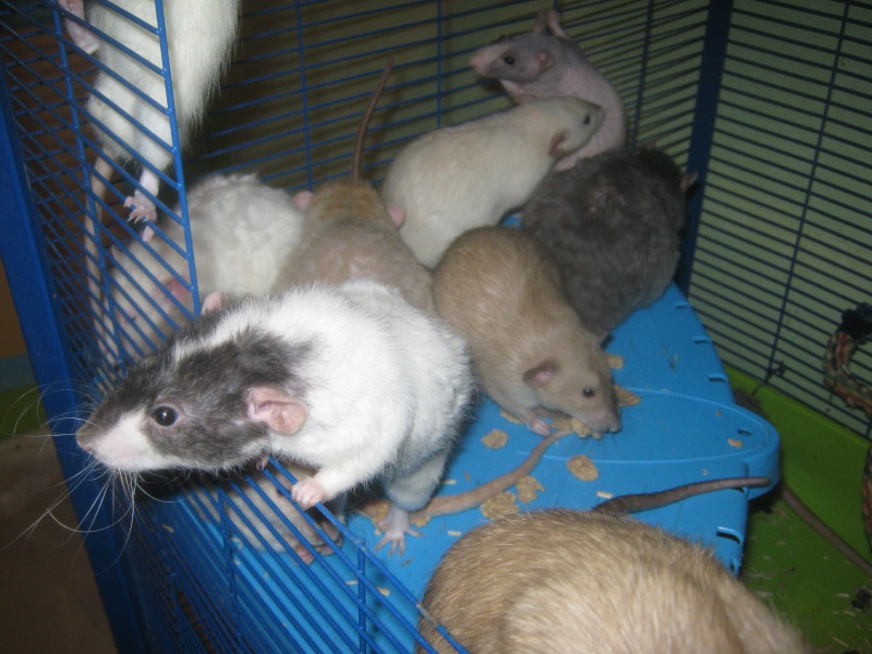 les filles et les garçons des CHAK'RATS  - Page 2 Img_0072