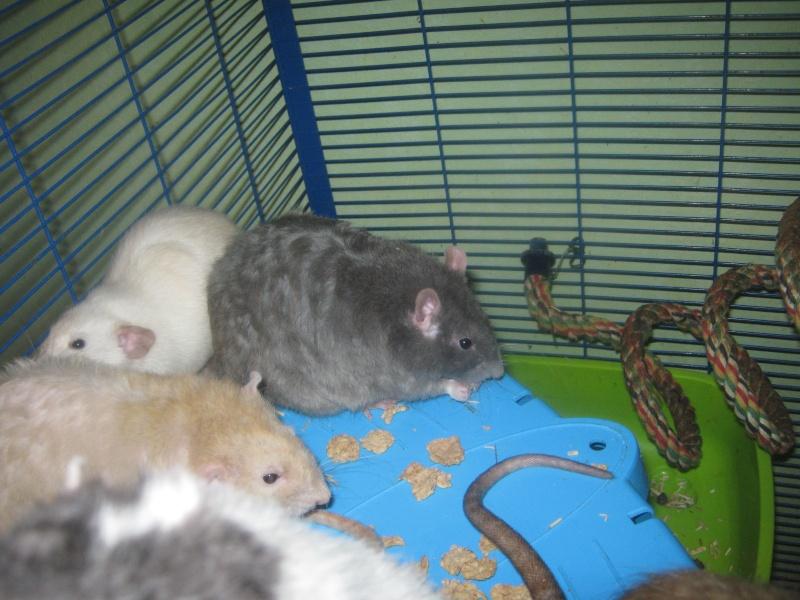 les filles et les garçons des CHAK'RATS  - Page 2 Img_0074