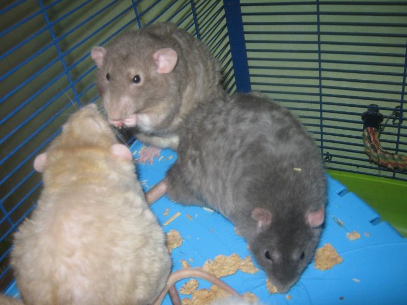 les filles et les garçons des CHAK'RATS  - Page 2 Img_0075