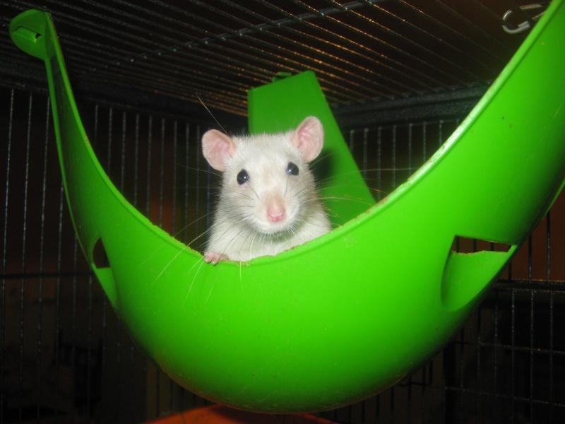 les filles et les garçons des CHAK'RATS  - Page 2 Img_0077