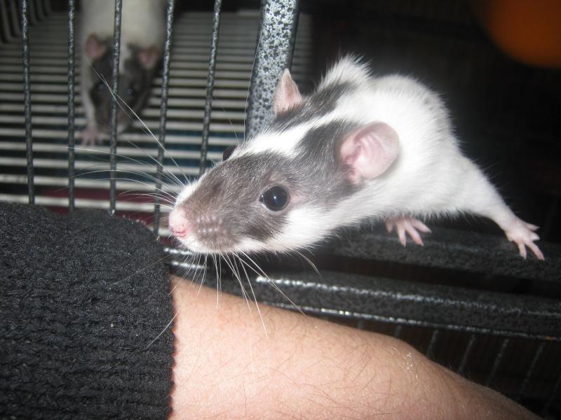 les filles et les garçons des CHAK'RATS  - Page 2 Img_0082