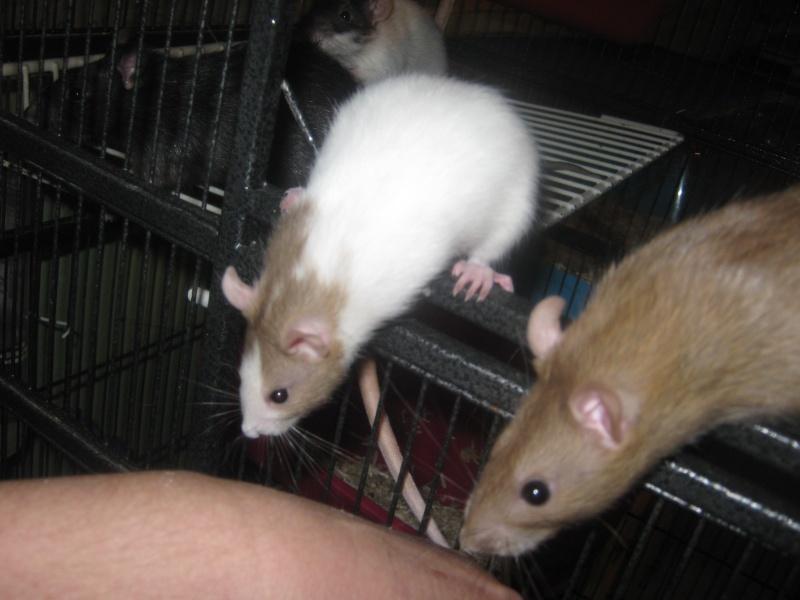 les filles et les garçons des CHAK'RATS  - Page 2 Img_0084