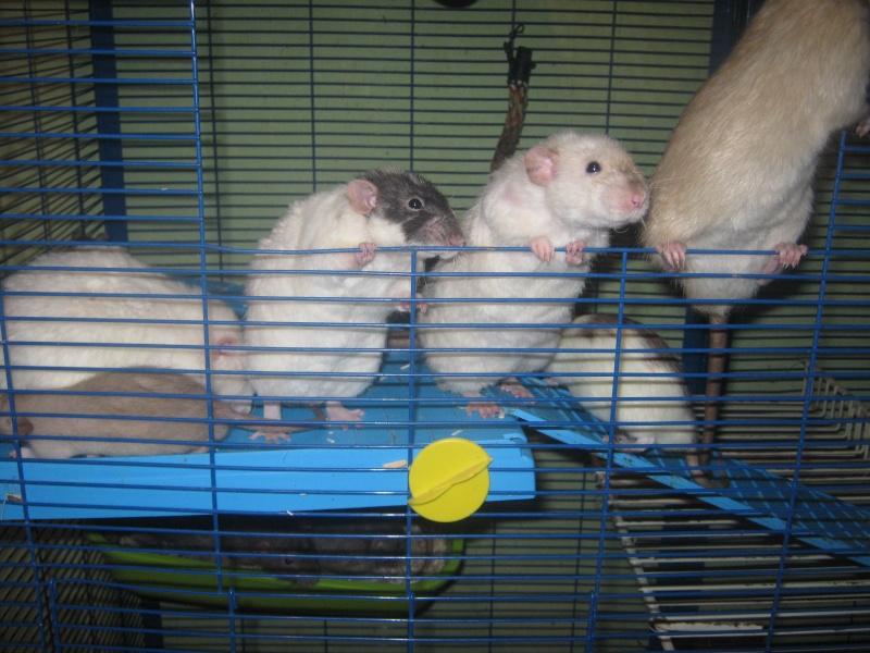 les filles et les garçons des CHAK'RATS  - Page 2 Img_0403