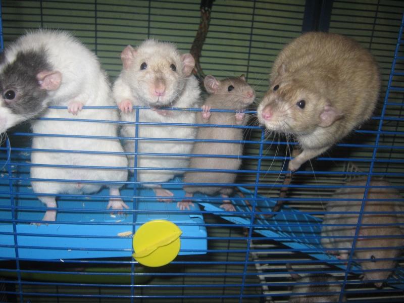 les filles et les garçons des CHAK'RATS  - Page 2 Img_0404