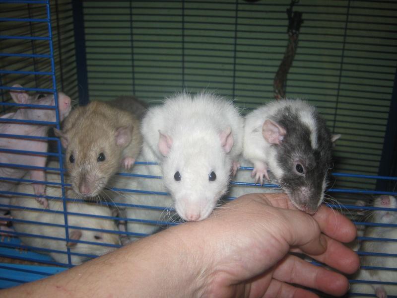 les filles et les garçons des CHAK'RATS  - Page 2 Img_0405