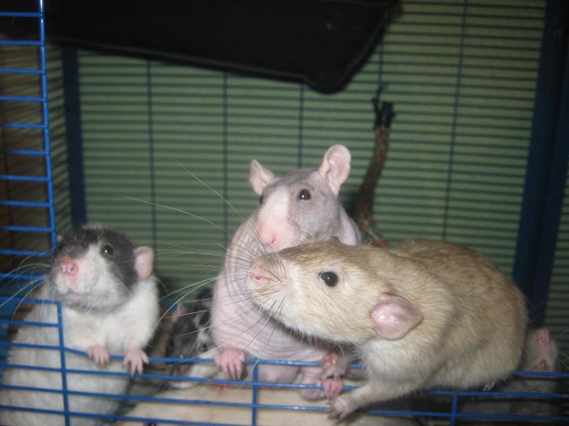 les filles et les garçons des CHAK'RATS  - Page 2 Img_0408