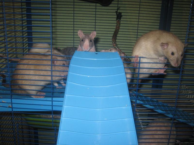 les filles et les garçons des CHAK'RATS  - Page 2 Img_0409