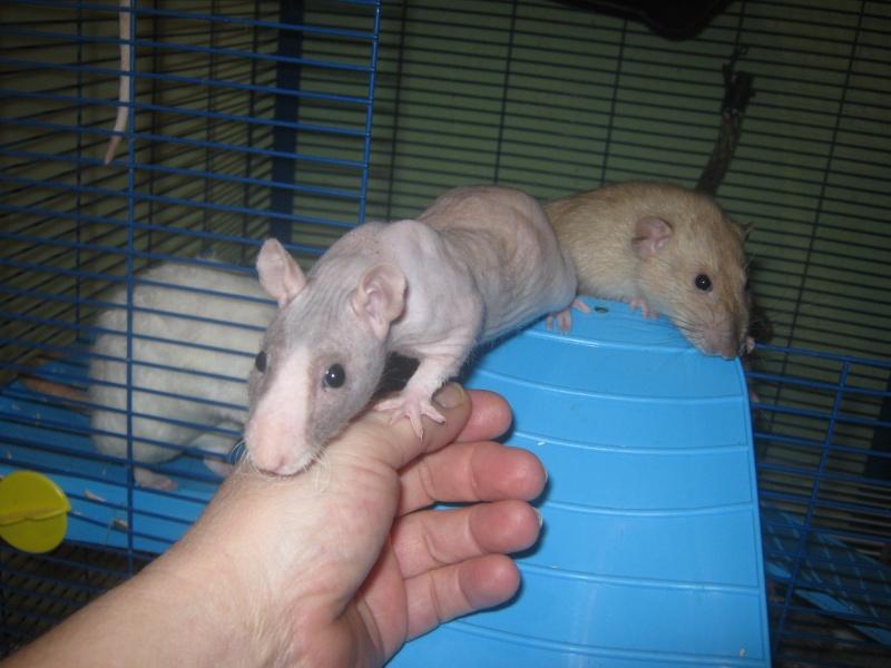 les filles et les garçons des CHAK'RATS  - Page 2 Img_0410