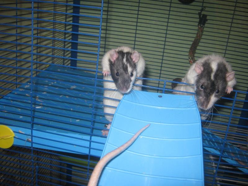 les filles et les garçons des CHAK'RATS  - Page 2 Img_0412