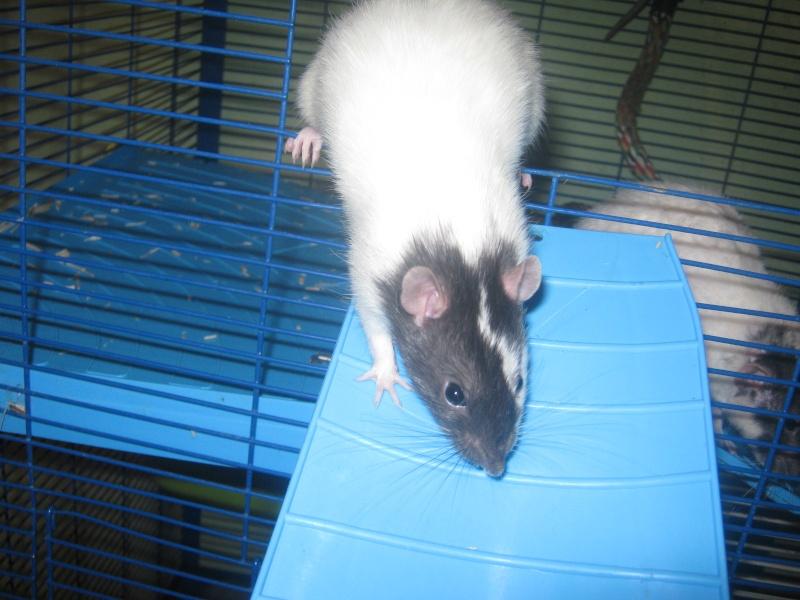 les filles et les garçons des CHAK'RATS  - Page 2 Img_0413