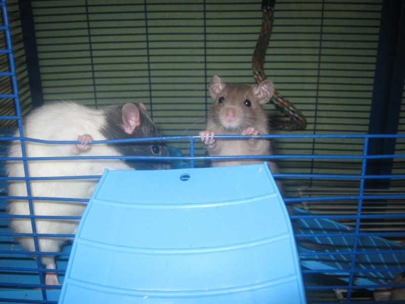 les filles et les garçons des CHAK'RATS  - Page 2 Img_0414