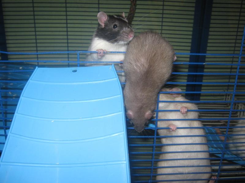 les filles et les garçons des CHAK'RATS  - Page 2 Img_0415