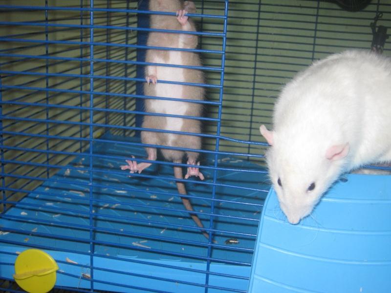 les filles et les garçons des CHAK'RATS  - Page 2 Img_0418