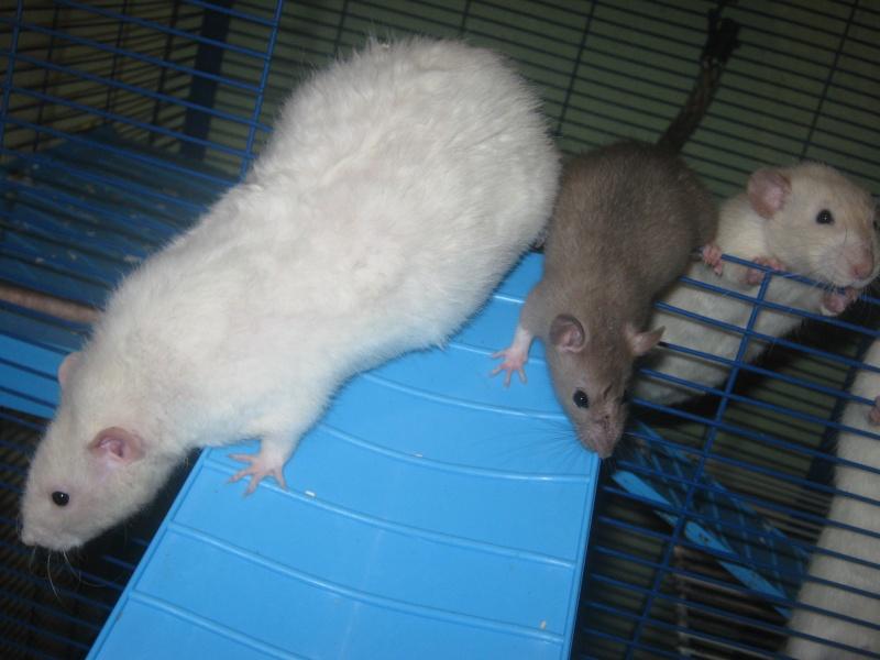 les filles et les garçons des CHAK'RATS  - Page 2 Img_0420