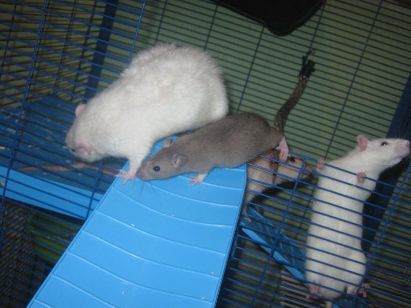 les filles et les garçons des CHAK'RATS  - Page 2 Img_0421