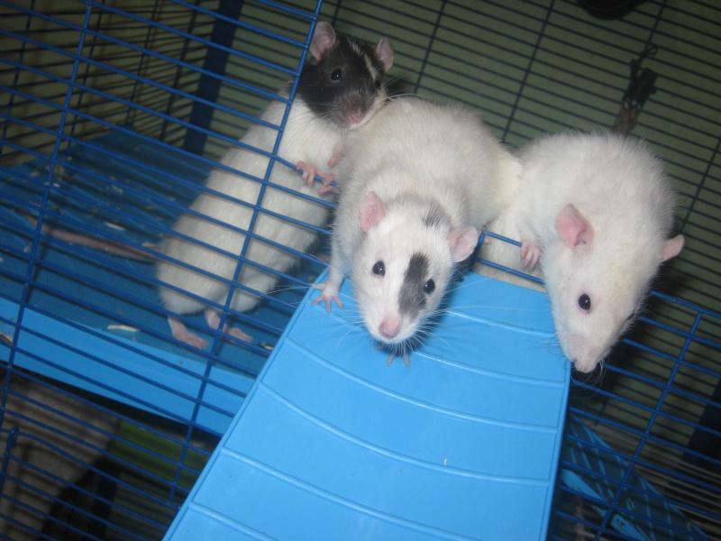 les filles et les garçons des CHAK'RATS  - Page 2 Img_0424