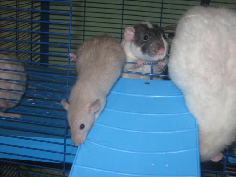les filles et les garçons des CHAK'RATS  - Page 2 Img_0425