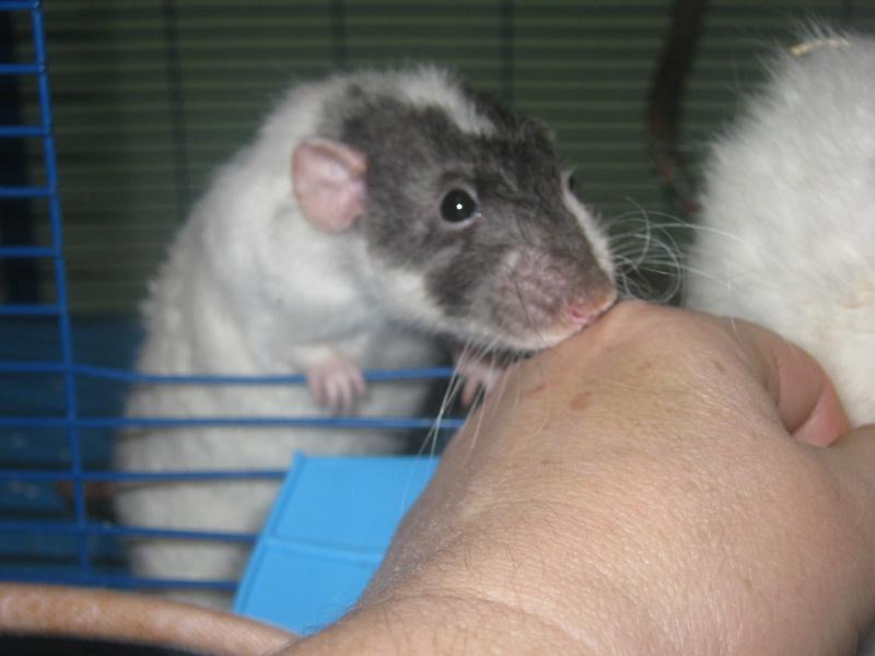 les filles et les garçons des CHAK'RATS  - Page 2 Img_0426