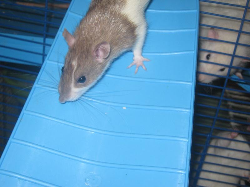 les filles et les garçons des CHAK'RATS  - Page 2 Img_0427