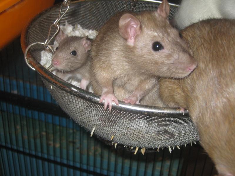 les filles et les garçons des CHAK'RATS  - Page 2 Img_0432