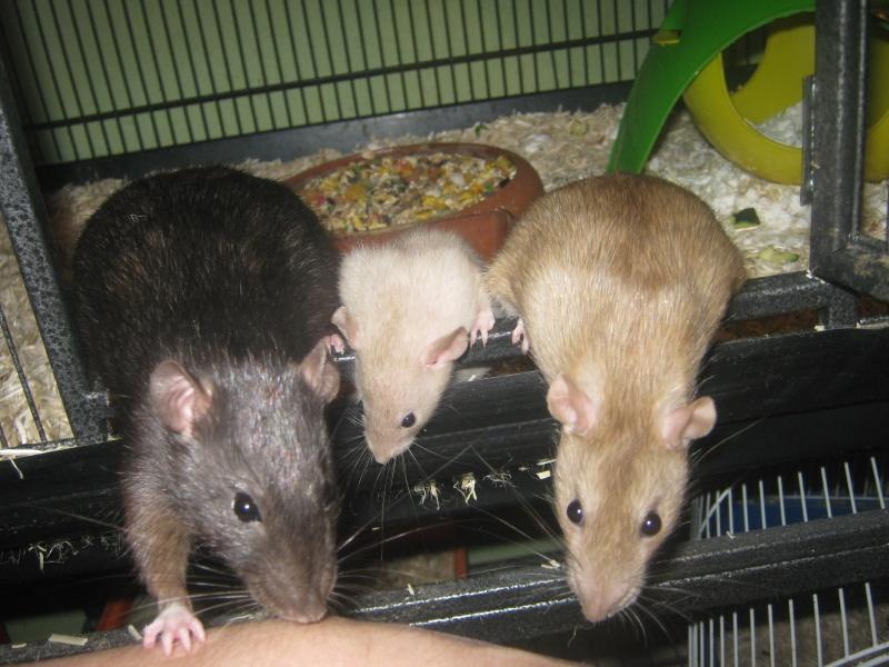 les filles et les garçons des CHAK'RATS  - Page 2 Img_0434