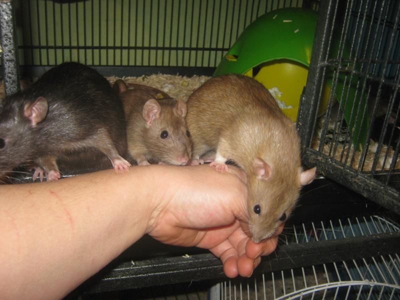 les filles et les garçons des CHAK'RATS  - Page 2 Img_0435