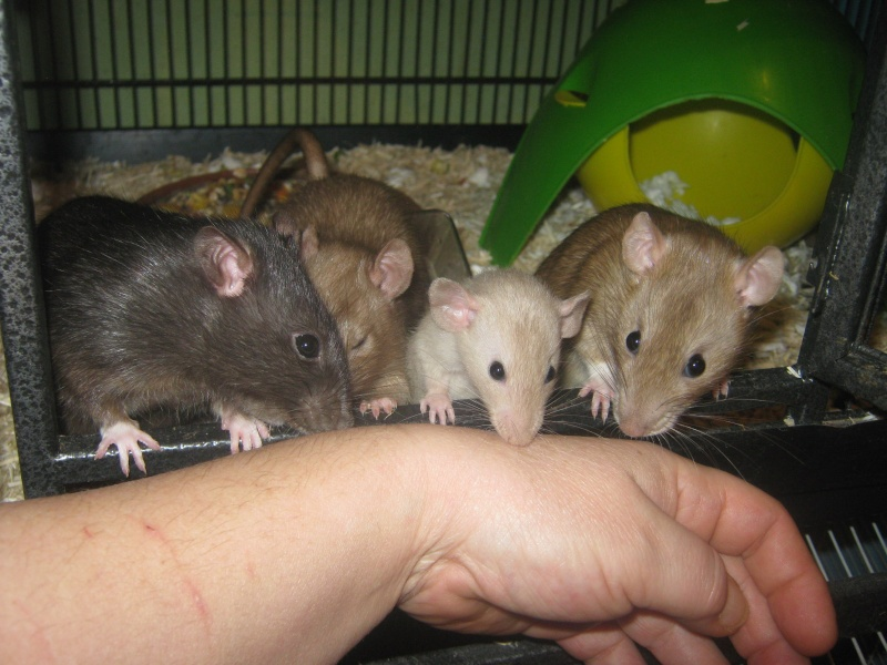 les filles et les garçons des CHAK'RATS  - Page 2 Img_0436