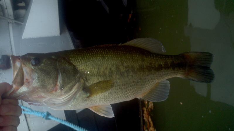 Votre pêche carna de Septembre 2011-015